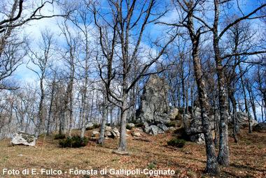 Foresta Gallipoli-Cognato (Foto E.Fulco)